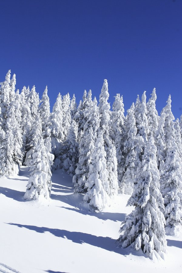 Free Christmas Trees In The Snow Stock Photo - 323120