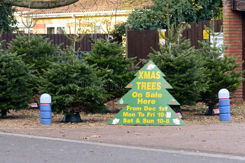 download christmas trees for sale sign stock photo image 48520406 - Christmas Trees For Sale