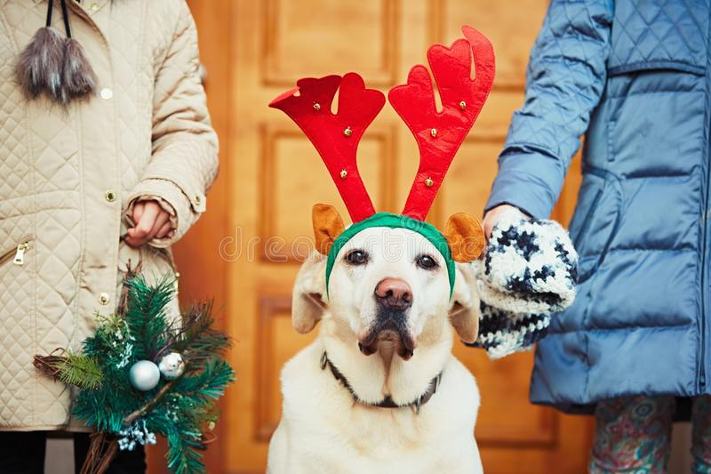 Christmas walk with dog. Two girl are going out with labrador retriever dressed as a Christmas reindeer stock photo
