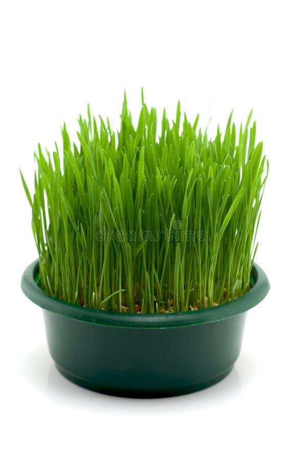 Christmas wheat stock image