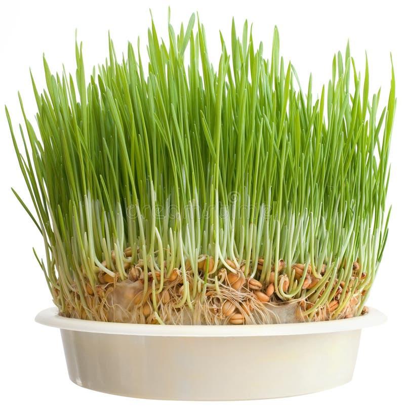 Download Christmas Wheat Cutout stock image. Image of organic - 25953867