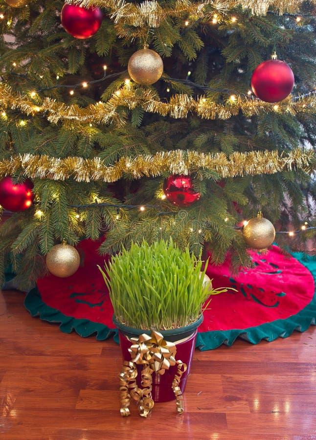 Free Christmas Wheat Under Xmas Tree Royalty Free Stock Photography - 42110067