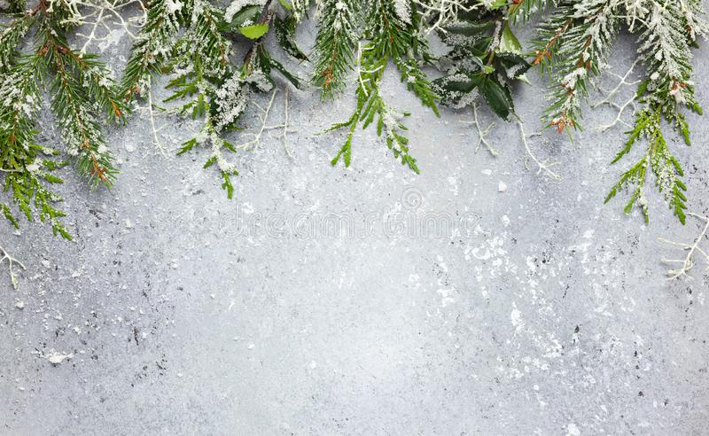 Christmas or winter background with a border of green and frosted evergreen branches on a grey vintage board. Flat lay. Winter concept with copy space royalty free stock image