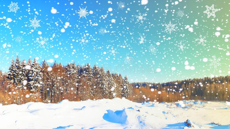 Christmas winter background. Snowflakes over snowy forest. Xmas scene of winter nature. Snowfall in forest stock photos