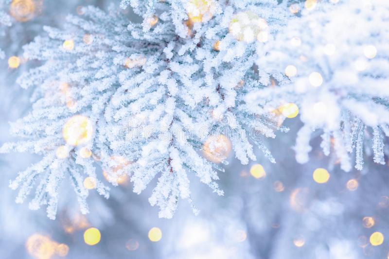Christmas winter fir tree scenic background. Branches covered with snow in the frost. Falling sparkles and lights bokeh closeup. Christmas winter fir tree royalty free stock images