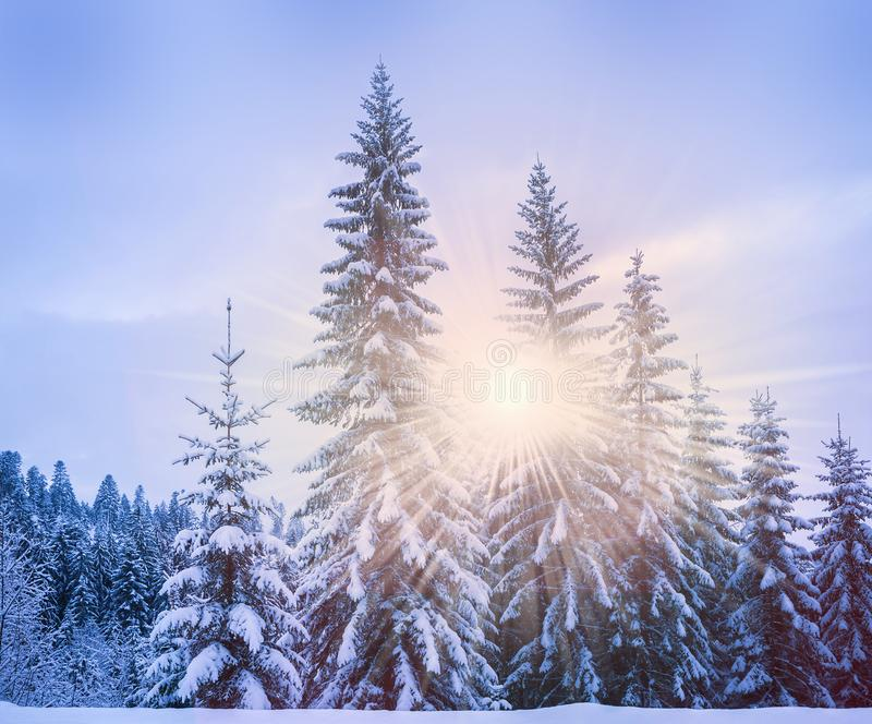 Christmas winter landscape stock photo