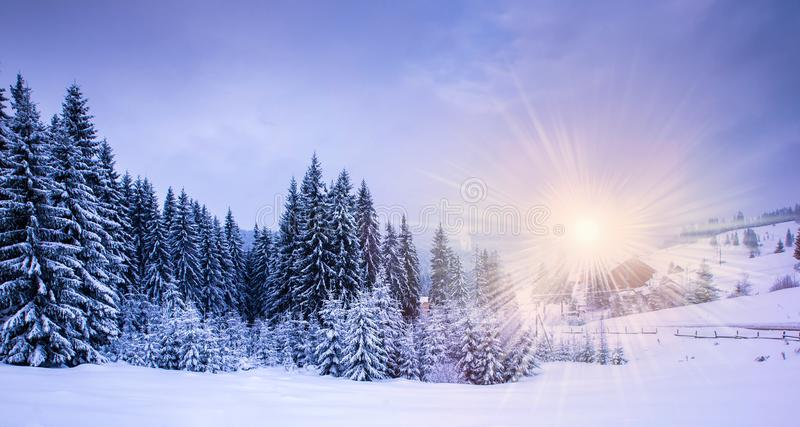 Christmas winter landscape stock photography