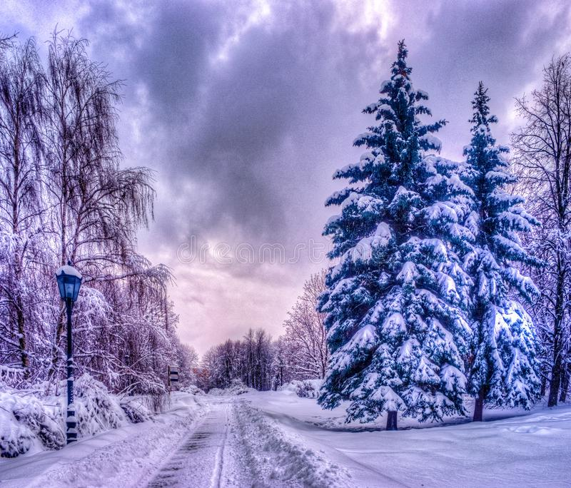 Christmas winter landscape, spruce and pine trees covered in snow stock image