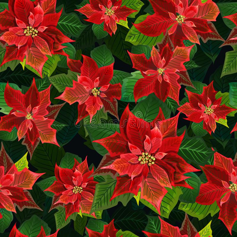 Christmas Winter Poinsettia Flowers Seamless Background, Floral Pattern Print in vector vector illustration