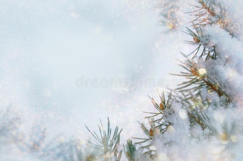 Christmas winter snow background. Blue spruce branches covered with snowflakes and copy space with blurred backdrop. Chris stock image