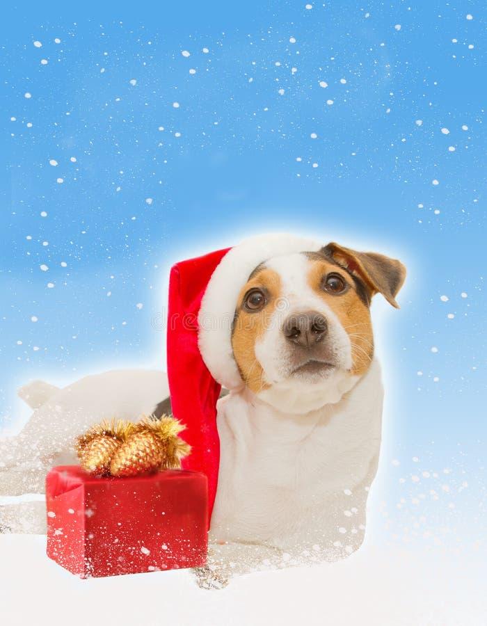 Christmaspostcard met grappige santahond, gift stock foto's