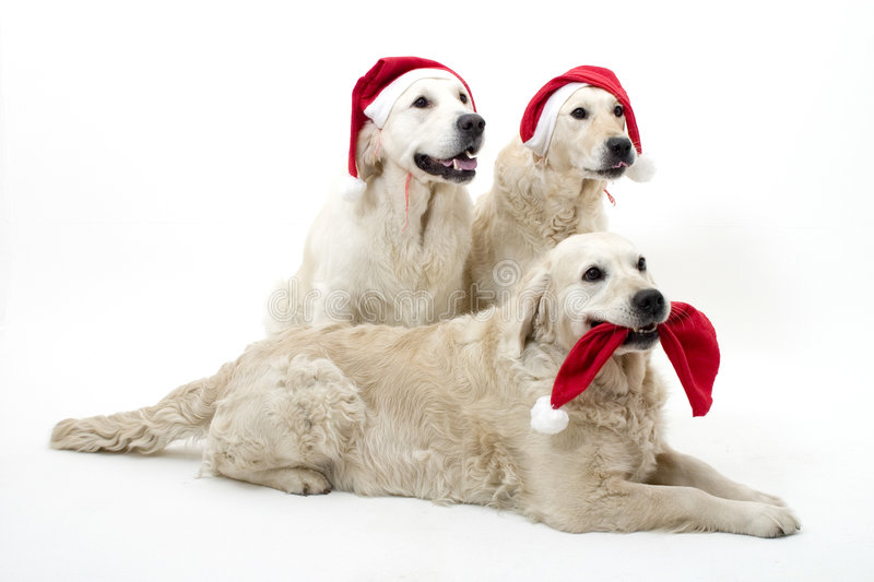 Christmass dogs royalty free stock photos