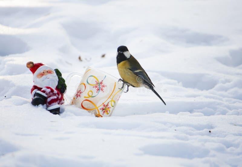 Christmass teraźniejszość dla ptaka fotografia royalty free