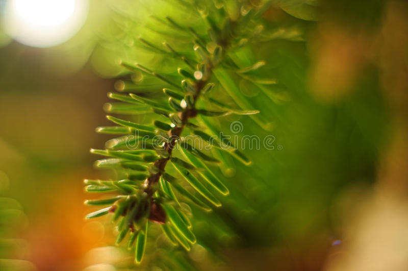 Christmass tree. Green twig. Makro. stock photos