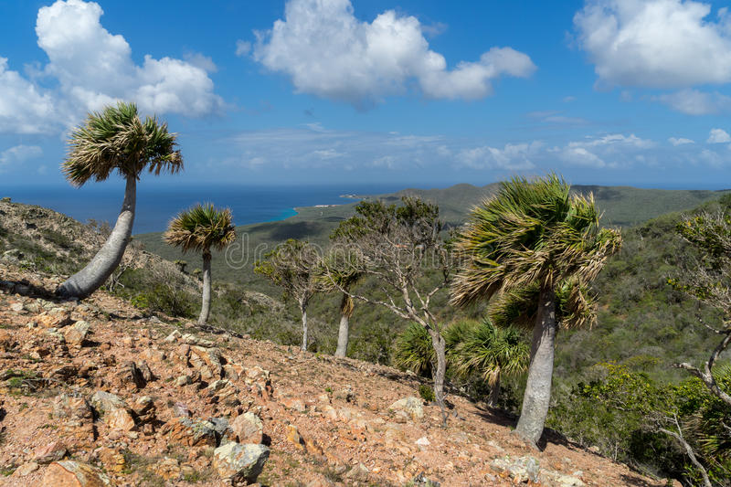 Christoffel nationalparkpalmträd royaltyfria bilder
