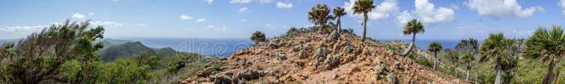 Christoffel nationalparkpalmträd - panorama arkivbilder