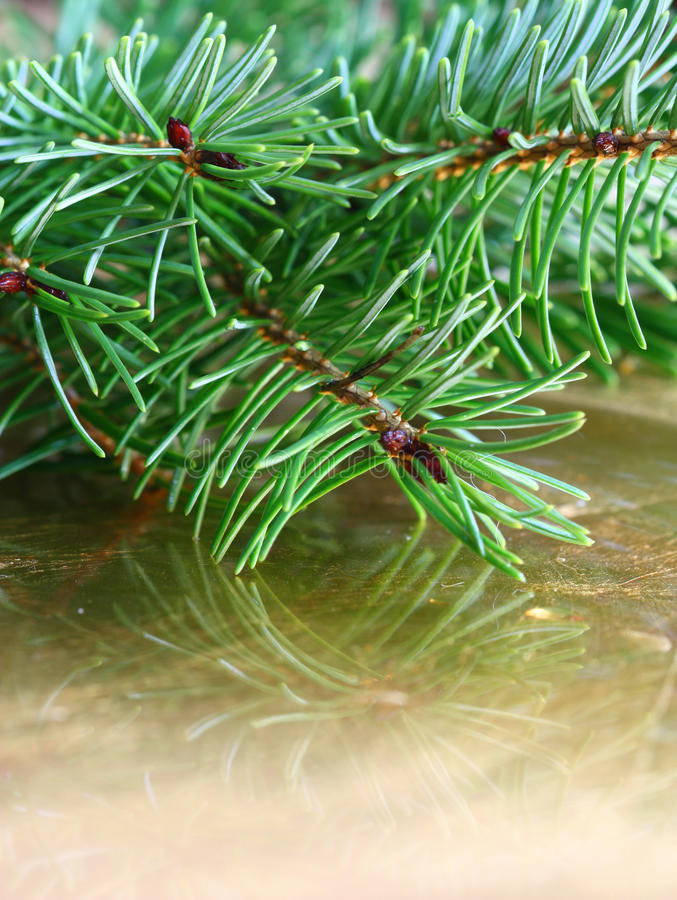 Download Christrmas冷杉 库存图片. 图片 包括有 圣诞节, 结构树, beautifuler, 特写镜头 - 22358835