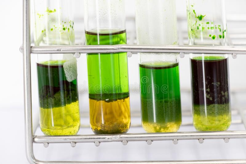 Chromatography is used to separate components of a plant. Study of Chromatography is used to separate components of a plant royalty free stock photos