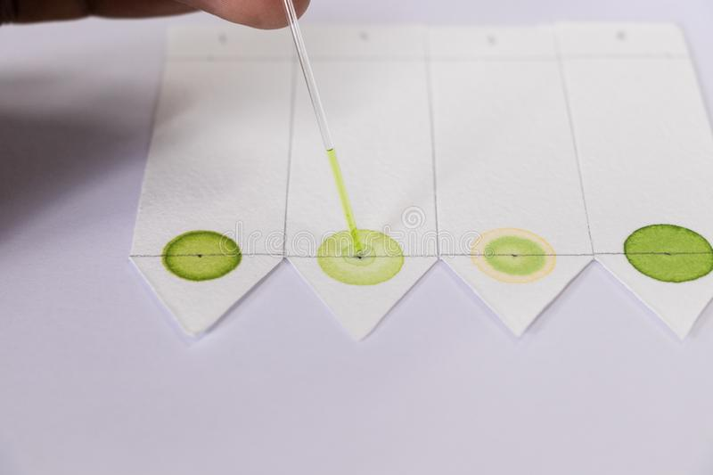 Chromatography is used to separate components of a plant. Study of Chromatography is used to separate components of a plant royalty free stock image