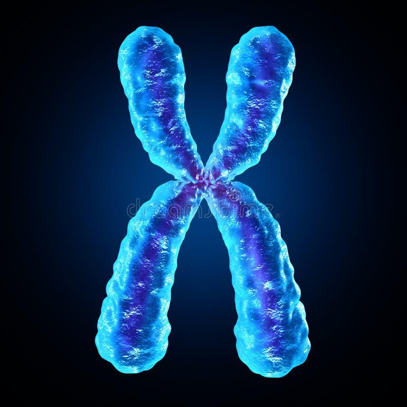 chromosome illustration libre de droits