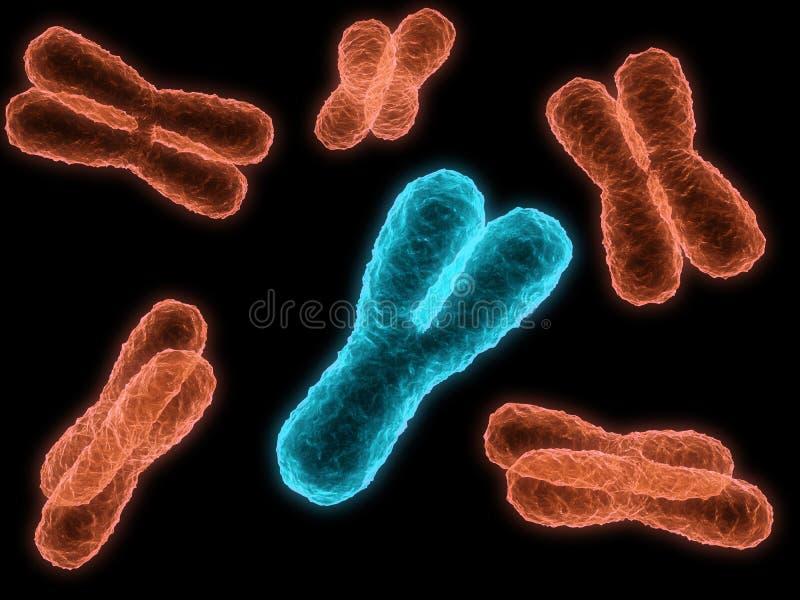 Chromosome stock illustration