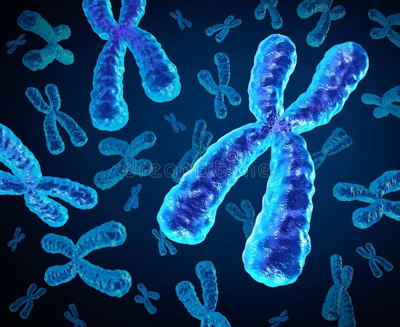 Chromosomes. Group as a concept for a human biology x structure containing dna genetic information as a medical symbol for gene therapy or microbiology genetics stock illustration
