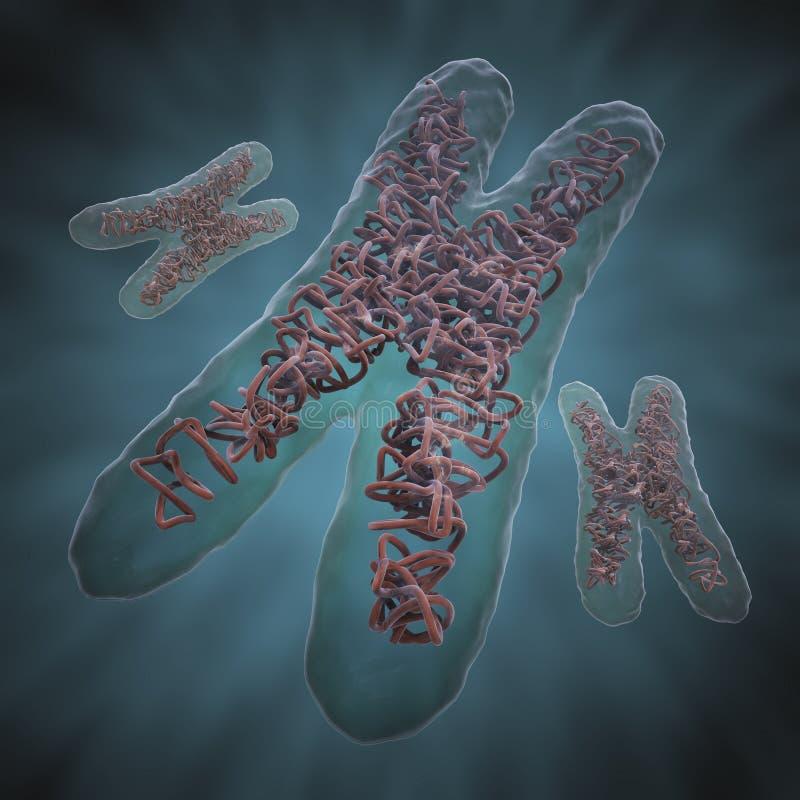 Chromosoom X stock illustratie