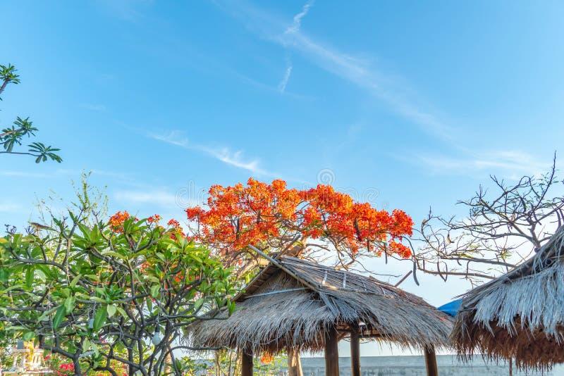 Chromy Drzewny kwiat na niebieskiego nieba tle obraz stock