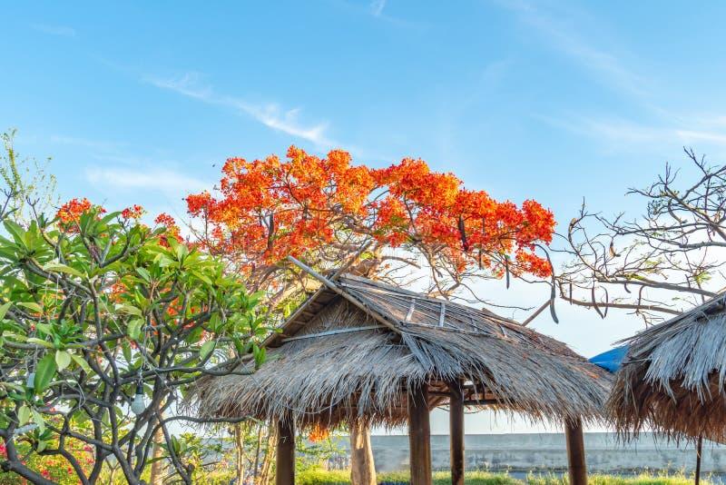 Chromy Drzewny kwiat na niebieskiego nieba tle obrazy stock