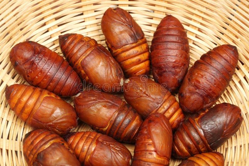 Chrysalis silkworm. Silk worm cocoon stock photo