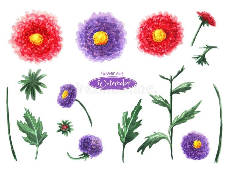 Chrysant en aster, bloemhoofden, bladeren, knoppen Ge?soleerdj op witte achtergrond vector illustratie