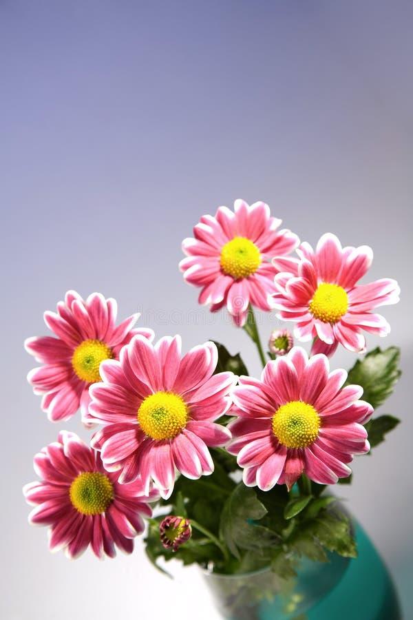 Chrysantemum Blumenstrauß in der Glasschüssel lizenzfreie stockbilder