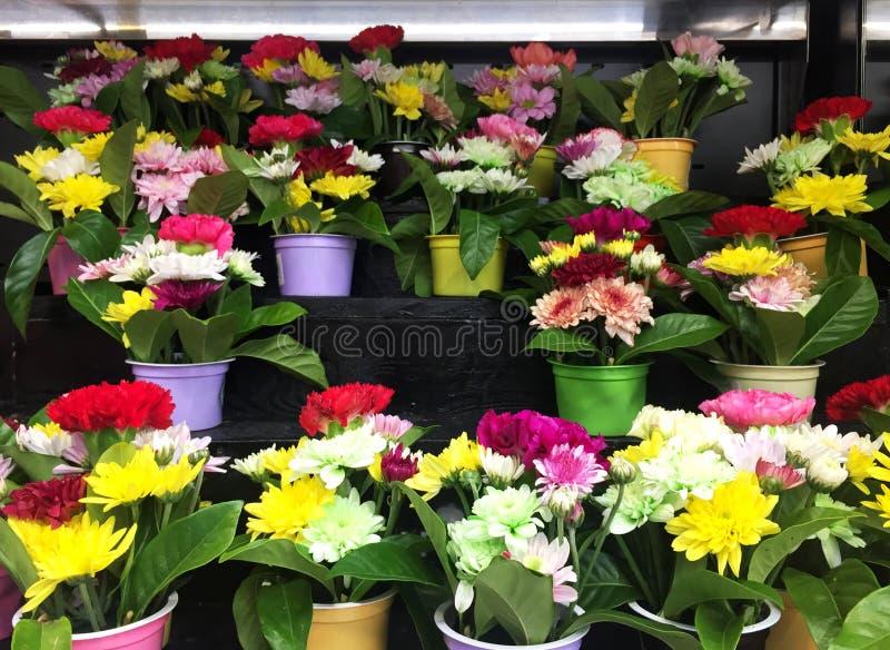 Chrysanthème dans le mini pot de couleur image libre de droits