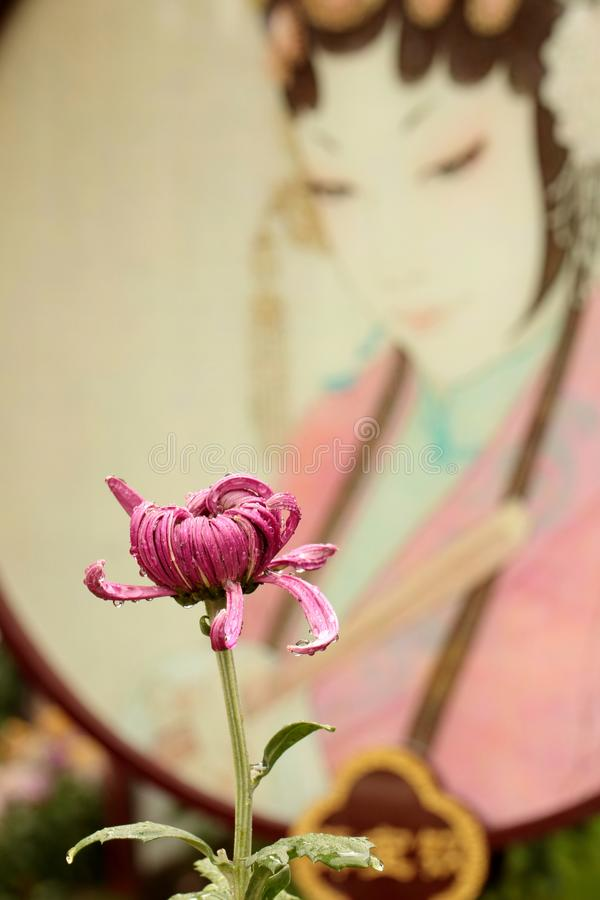 Chrysanthème et opéra de Pékin image libre de droits