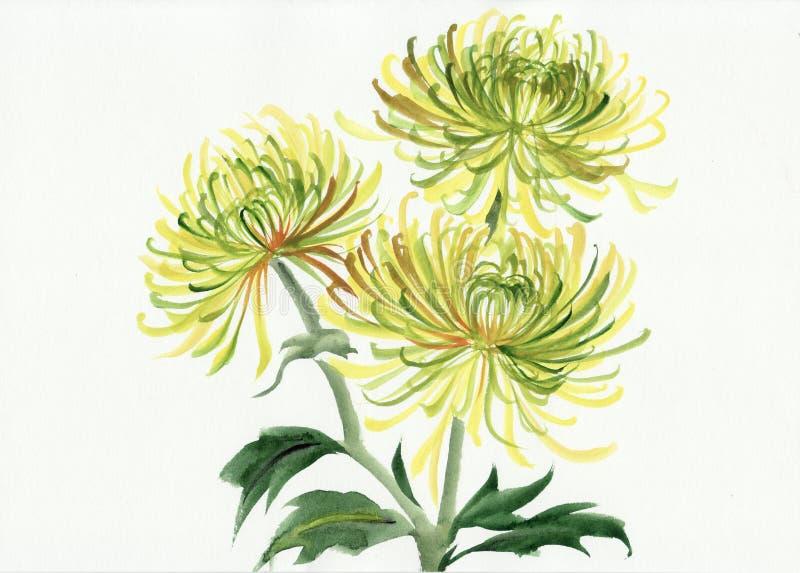 Chrysanthème jaune et vert illustration de vecteur