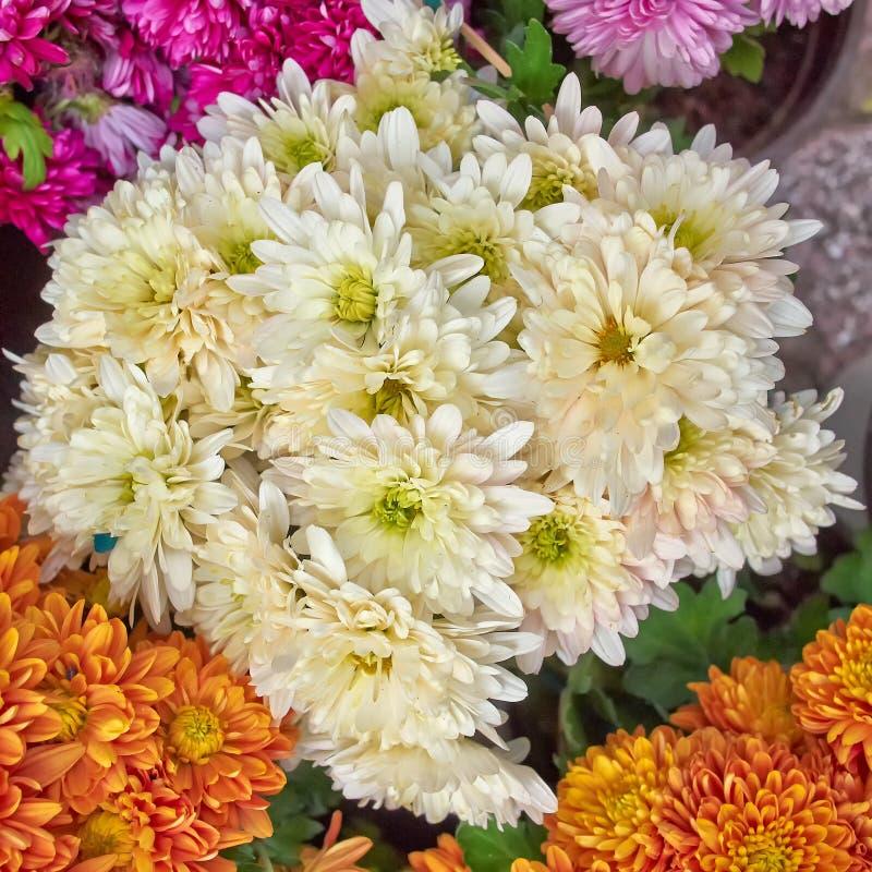 Chrysanthèmes, fond floral naturel photo stock