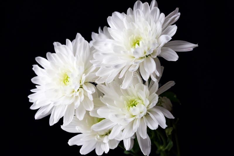 Chrysanthemen-Blumenstrauß für Mutter ` s Tag lizenzfreies stockbild