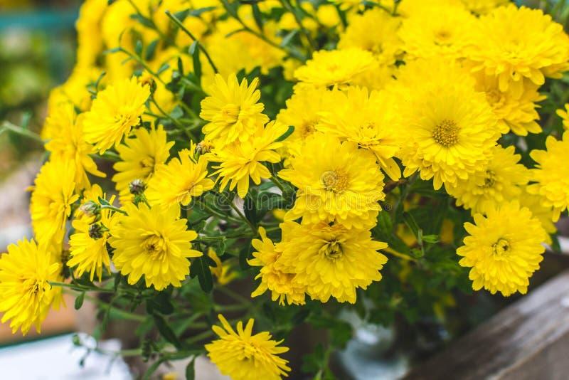 Chrysanthemen 2 lizenzfreie stockfotos