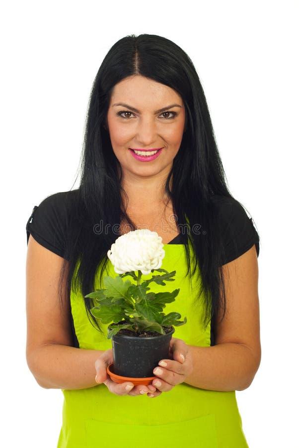 Chrysanthemum de blanc de holdng de femme de fleuriste image libre de droits