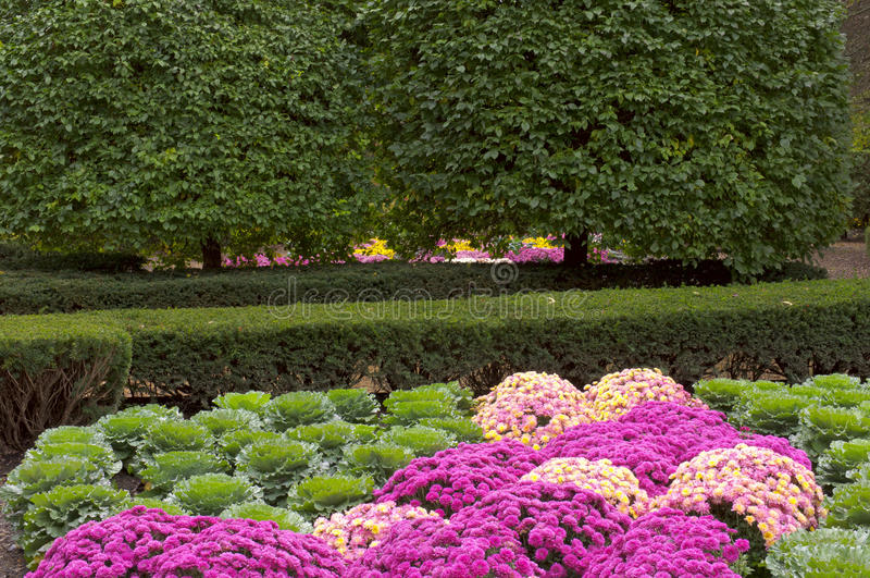 Chrysanthemum And Kale Garden Crossing Stock Photo - Image of ...