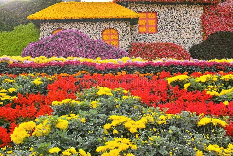 Chrysanthemum parterre royalty free stock photo