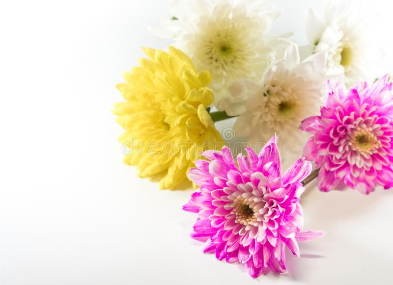 Chrysanthemum Pink Yellow And White In Flower Bouquet Stock Image ...