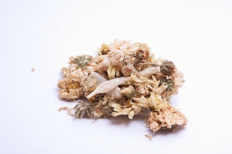 Chrysanthemum sec photographie stock libre de droits