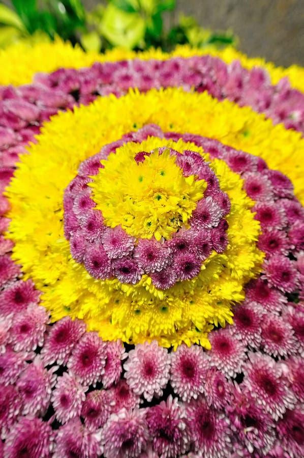 Chrysanthemum in spiralling pattern