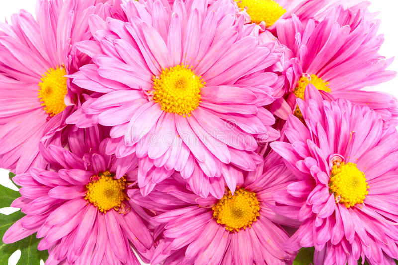 Download Chrysanthemums. stock photo. Image of flowers, white - 28987244