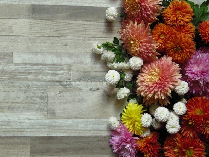 Chrysanthemums Olika livfulla färger av olika Chrysanthemum-blommor på vit träbakgrund fotografering för bildbyråer