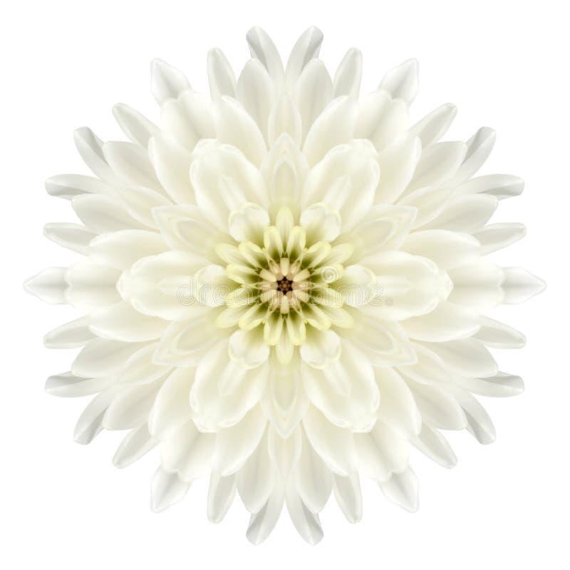 Chrysathemum blanco Mandala Flower Kaleidoscopic Isolated en blanco fotos de archivo
