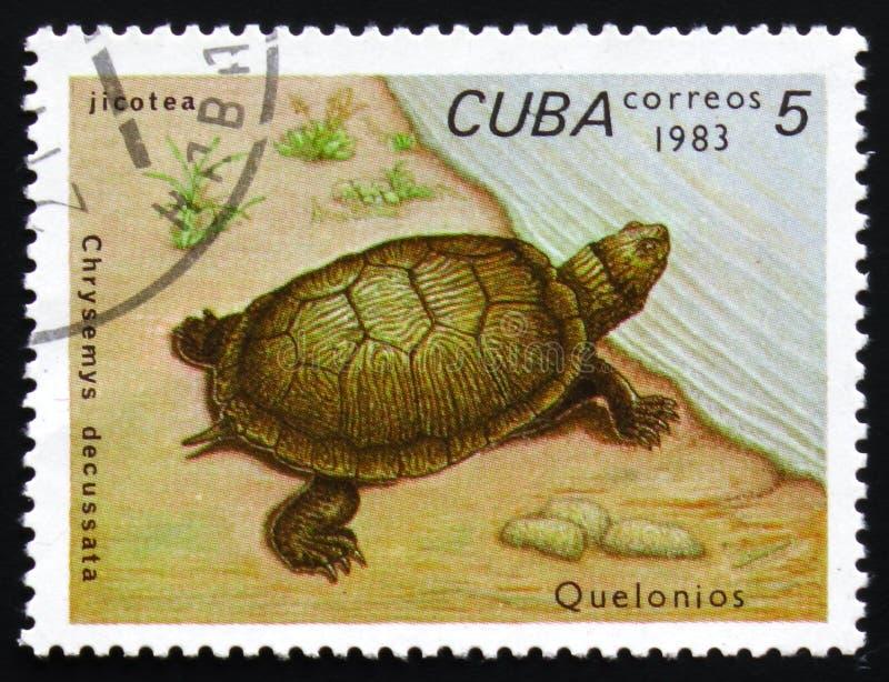 Chrysemys decussata, Reihe widmete sich Schildkröten, circa 1983 lizenzfreie stockfotografie