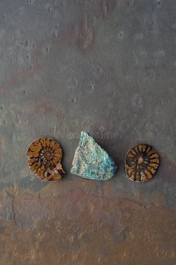 Chrysocolla en Fossil Ammonite royalty-vrije stock foto