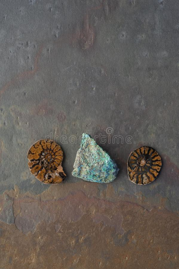 Chrysocolla and Fossil Ammonite royalty free stock photo